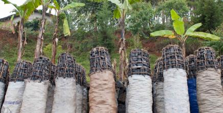 Sustainable bioenergy – vital to foster Africa's food system